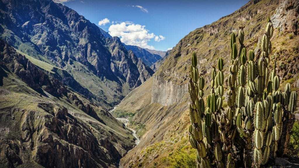 Cactus and Views from the Colca Canyon Trek in Arequipa