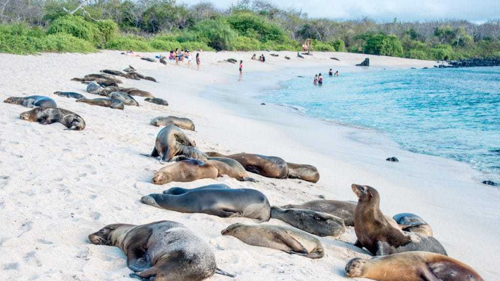 Sea Lions in the Galapagos, south american trips, Galapagos islands