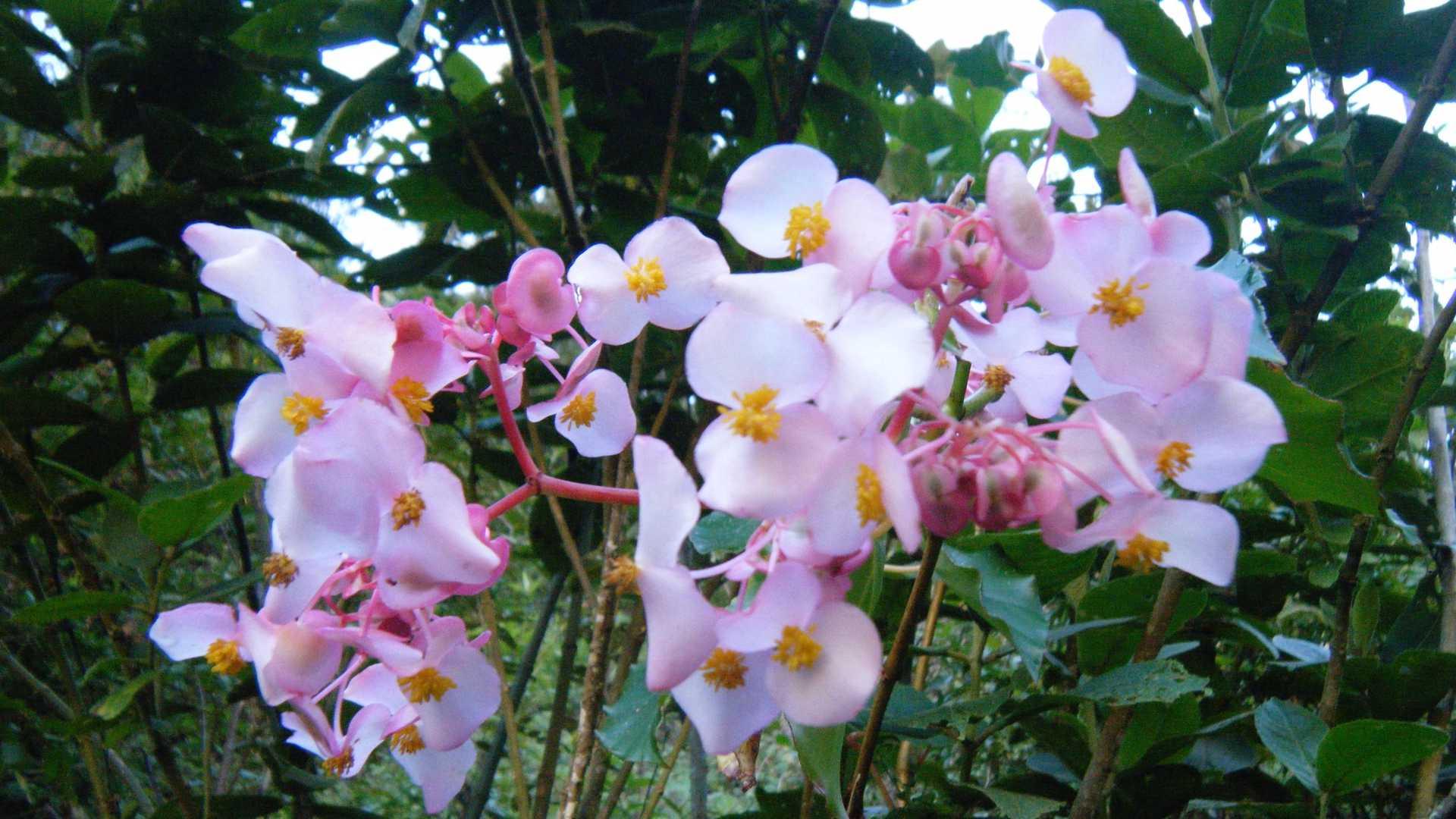 Flora on the Inca Jungle Trail to Machu Picchu