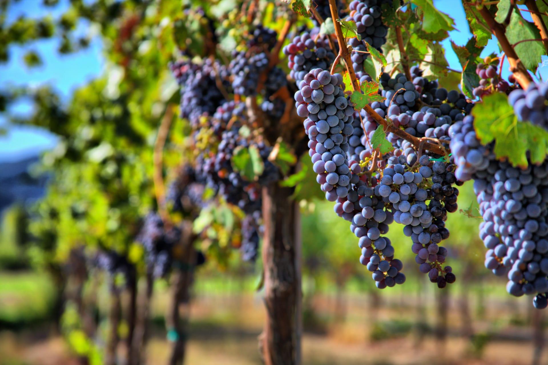 wine trips in Cafayate , Argentina