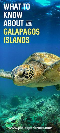 Galapagos Islands Tourism - Pinterest image