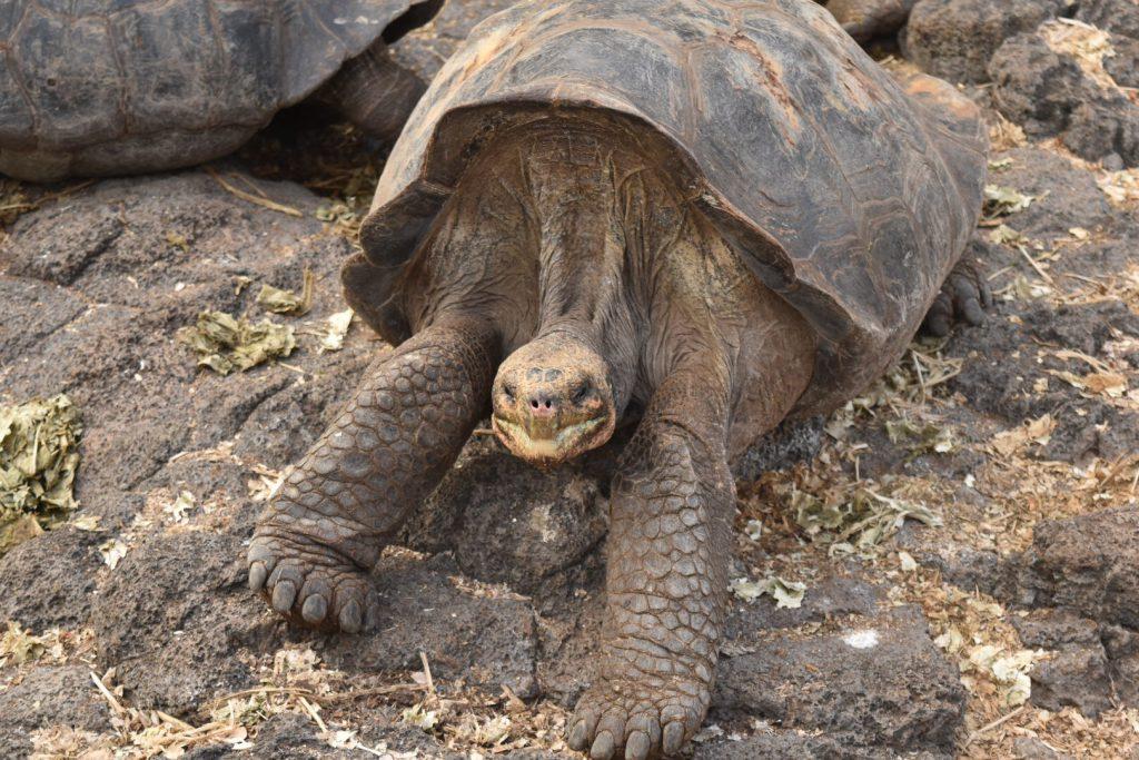 Galapagos Islands tourism.