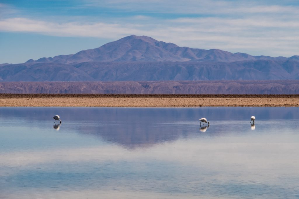 flamingos in san pedro de atacama travel guide