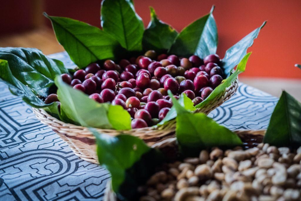New Inca Trail to Machu Picchu, Carcel Trek - Coffee berries.
