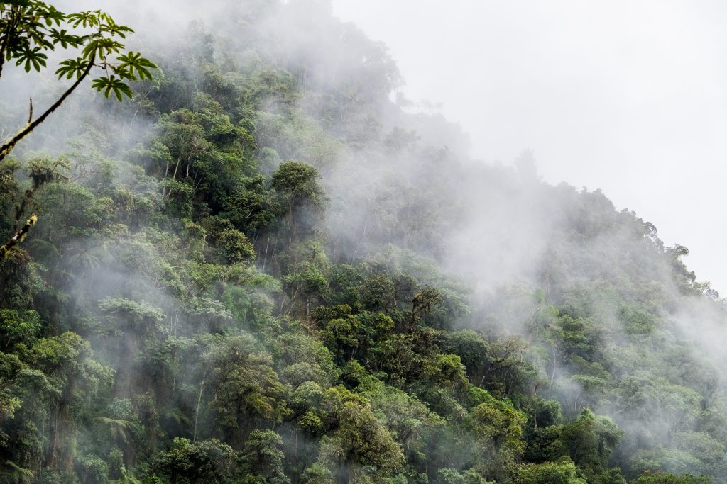 New Inca Trail to Machu Picchu, Carcel Trek - Misty cloud forest.