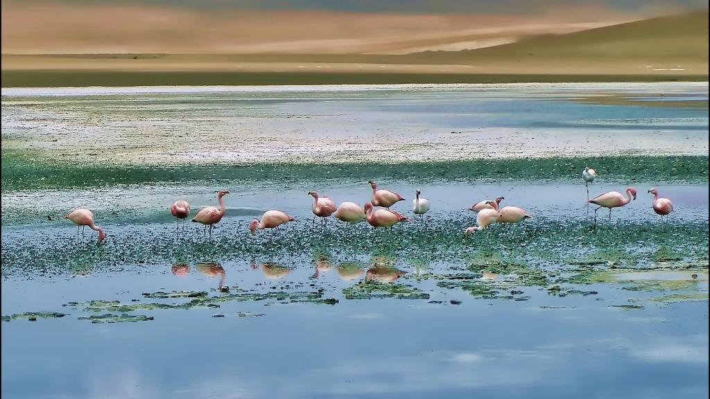 Flamingos during Salt flat during Uyuni Trip
